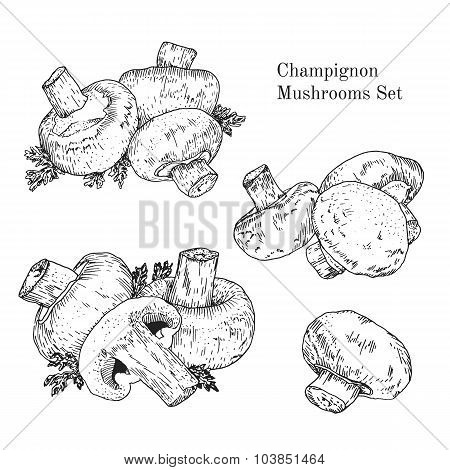 Ink champignon mushrooms sketches set
