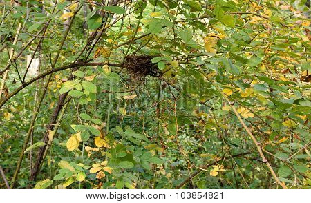 Abandoned Bird Nest Hidden In Thick Bushes.