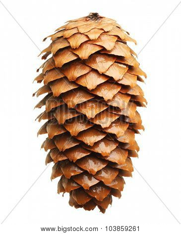 Pine tree cone isolated on white. Christmas decoration.