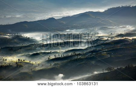 Morning valley with tea plantations filled with fog in the highland area of Sri Lanka