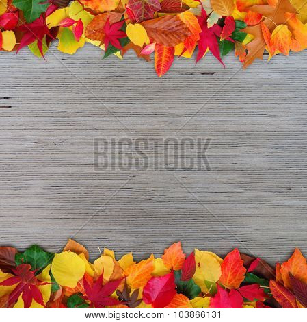 decorative autumn background