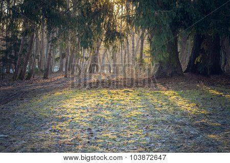 Sunrise Through Foliage, Frosty Autumn Morning Background