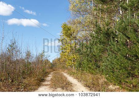 Falling oak leaves on   scenic autumn forest