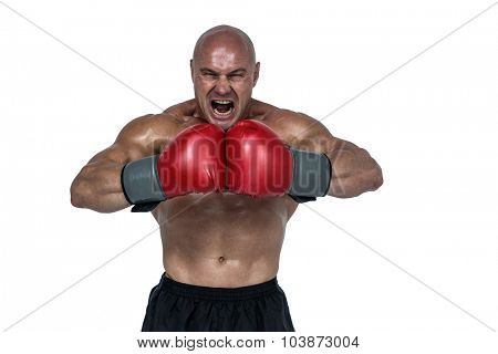 Aggressive boxer flexing muscles against white background