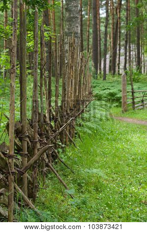 Wooden Paling Fence In Scenic Forest