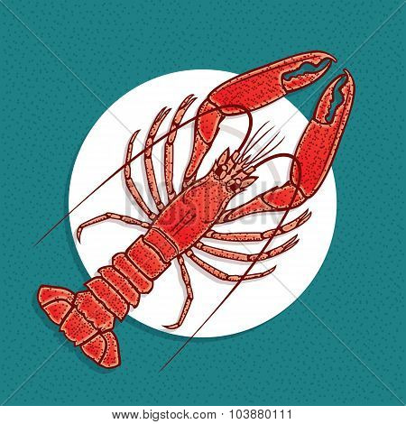 Lobster or crayfish vector illustration in vintage style.