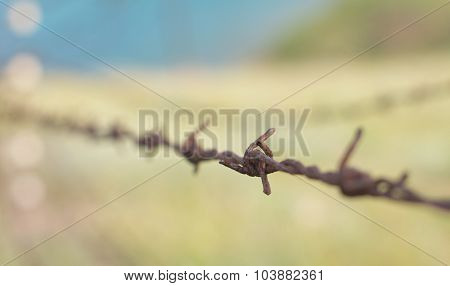 Rusty Barbed Wire Close-up