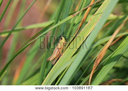 Photo of grasshopper closeup