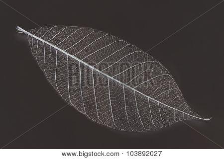 Dry Transparent Leaf