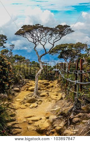 Isolated Tree On Stony Path With Blue Sky -borneo