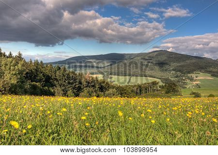 Summer Mountain Scenery With Flowering Meadow