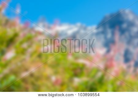 Defocused Blur Image Of Mountains And Pink Flowers