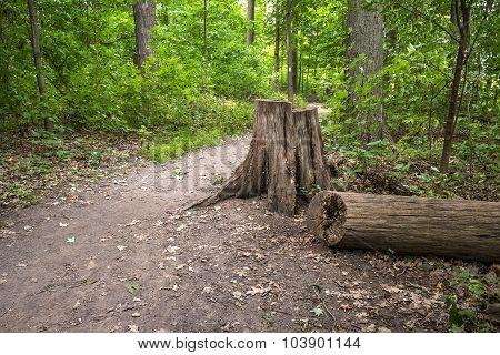 Scenic Ontario Bruce Trail