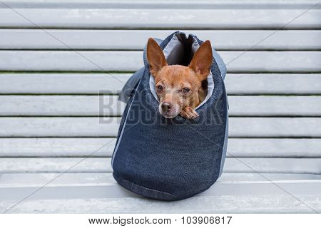 Small Doggie In A Bag On A Bench