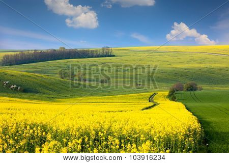 Panoramic landscape of colorful yellow-green hills with ground road, blue sky and clouds