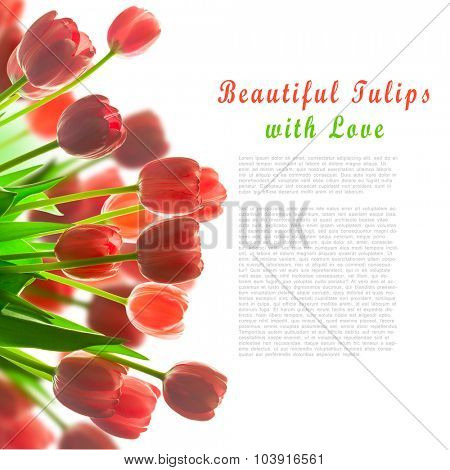 Border of Beautiful Tulips bouquet - with white background for your design