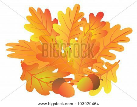 Oak Leaves And Acorn In Fall Vector Illustration