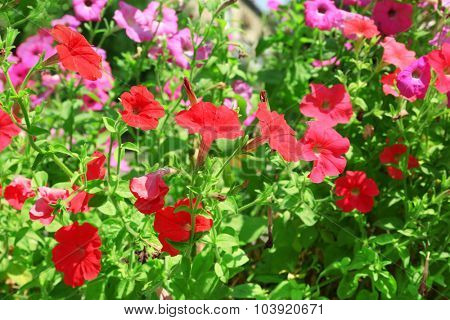 Fresh flowers over green grass background