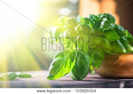 Fresh organic basil leaves on a wooden table