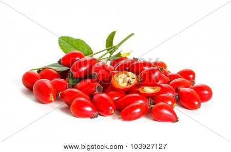 The branch of rose hips isolated on a white background