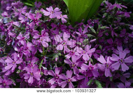 Floral soft tender  background from blue fresh cornflower