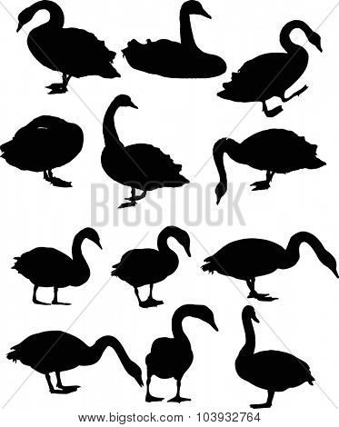 illustration with twelve swans isolated on white background