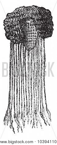 Egyptian wig, vintage engraved illustration.