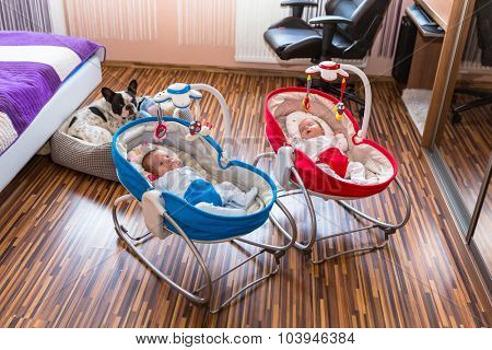 Baby twins lying down in cradles with dog watching them