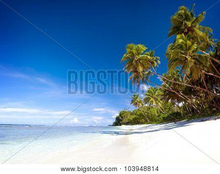 Summer Beach Tropical Paradise Seascape Concept