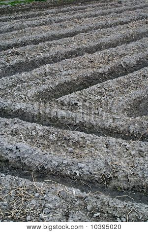 A Ploughed Japanese Rice Field Showing Intersecting Furrows