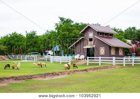 A red house in the sheep farm