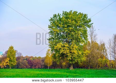 Autumn Scenery With Branchy Tree On Meadow