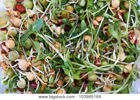 Microgreens salad with green fresh shoots. Health and diet.