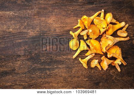Cantharellus cibarius, chanterelle mushrooms on wooden background