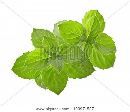 Mint spice
