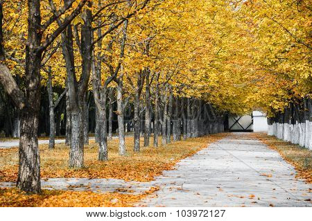 Autumn park alley with yellow leaves on trees