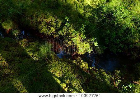 Shadows And Sunlight On Ground Cover Of Green Moss At The Forest Creek