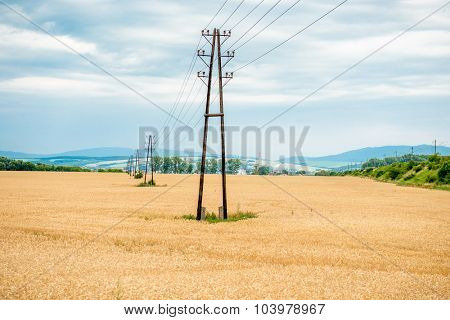 Electric poles in a wheat field under the beautiful clouds