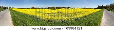 Panoramic View Of Rapeseed Field And Road