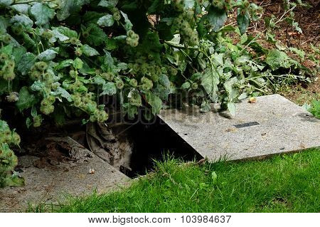 Dangerous hole in ground.