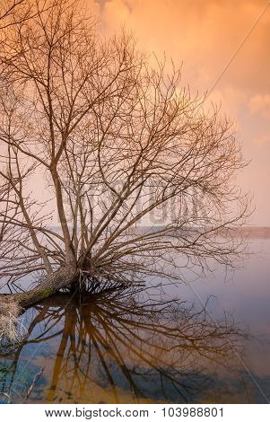 Lonely Bare Tree Is Above The Water Surface