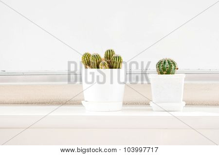 Two cactus in white pots on windowsill and a lot of space for text