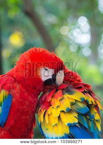 Pair of colorful  parrots