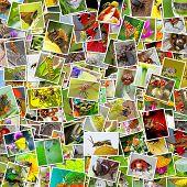 Постер, плакат: Insects Of Siberia