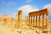 stock photo of euphrat  - historic columns at ancient palmyra in syria - JPG