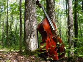 pic of musical instruments  - Double Bass in pure Nature. Playing Double Bass in a Natural environment. ** Note: Slight graininess, best at smaller sizes - JPG