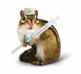 stock photo of laughable  - Vet concept funny squirrel with syringe and doctor hat on white - JPG