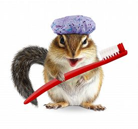 foto of laughable  - Funny chipmunk with toothbrush and shower cap on white - JPG