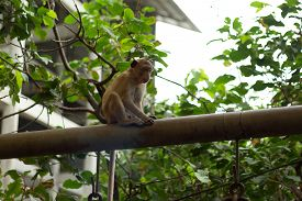 pic of macaque  - Potrait image of monkey  - JPG