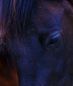 picture of lachrymal  - Closeup of a  black horse eye  - JPG